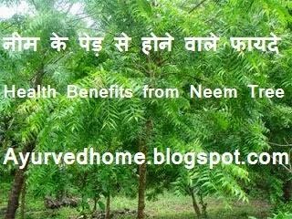 Neem Tree , नीम के पेड़ से होने वाले फायदे , Neem Ka Ped chamatkari dwari