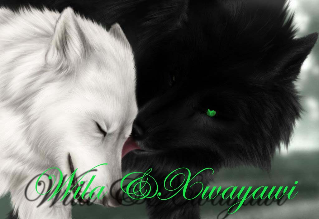 Black Wolf Licking A White Wolf