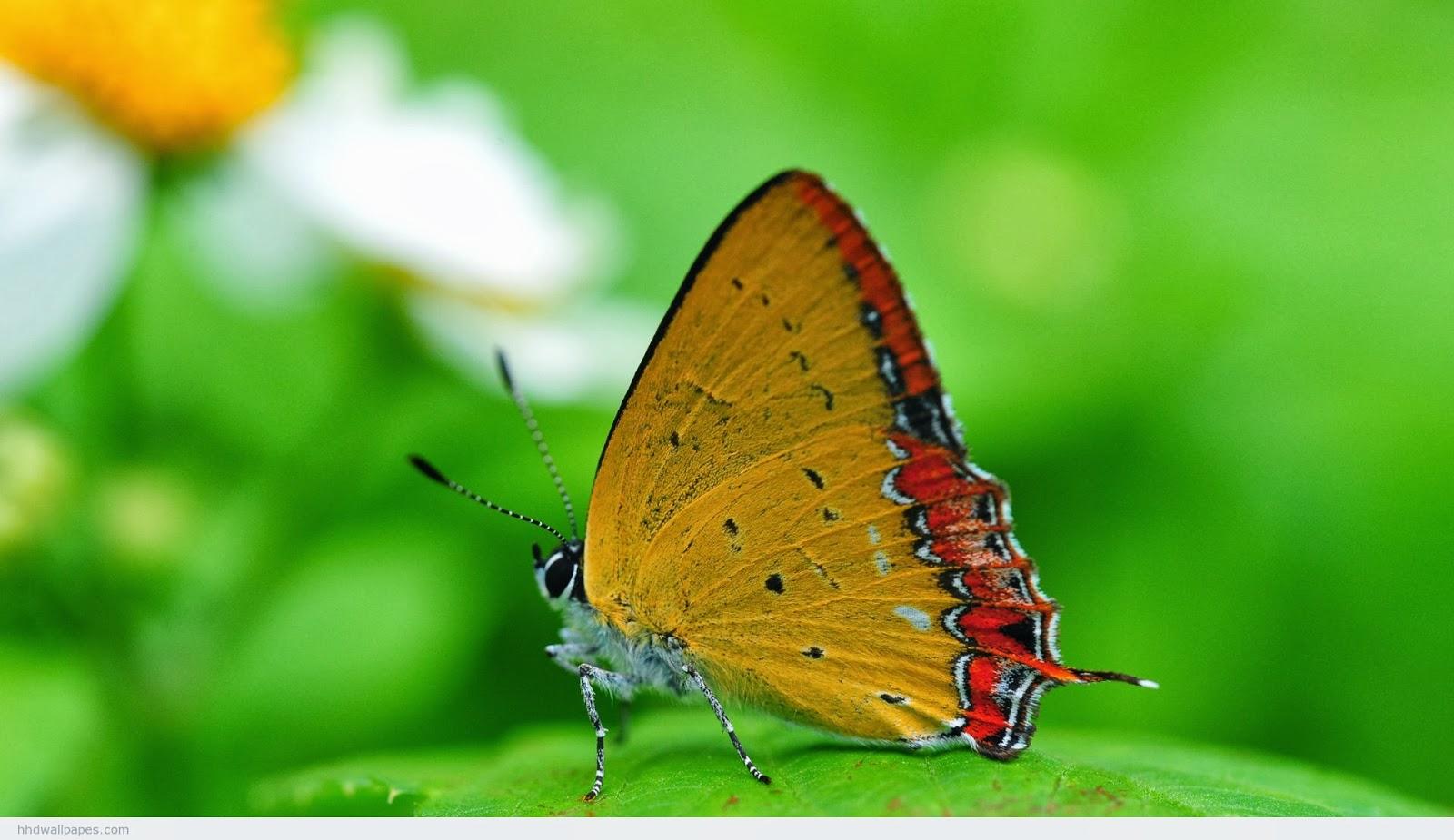 Ponte listo-mariposa verde