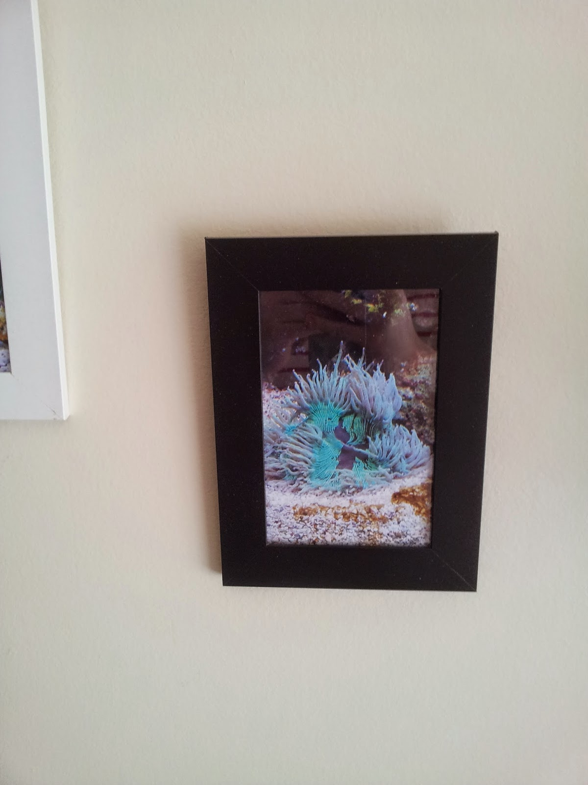 La vie d 39 une petite caille diy cadre aquarium for Aquarium cadre