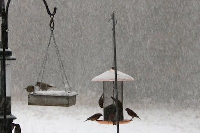 the copper-topped, wind-blown feeder in the snow