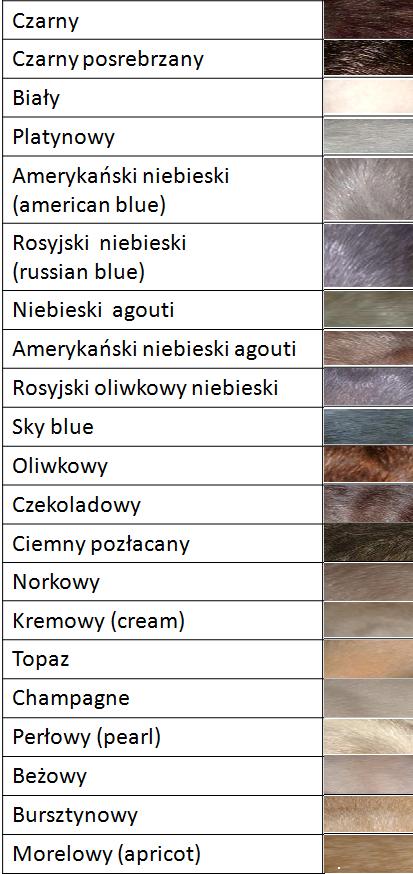 Szczurzy Wiat Odmiany Szczurw