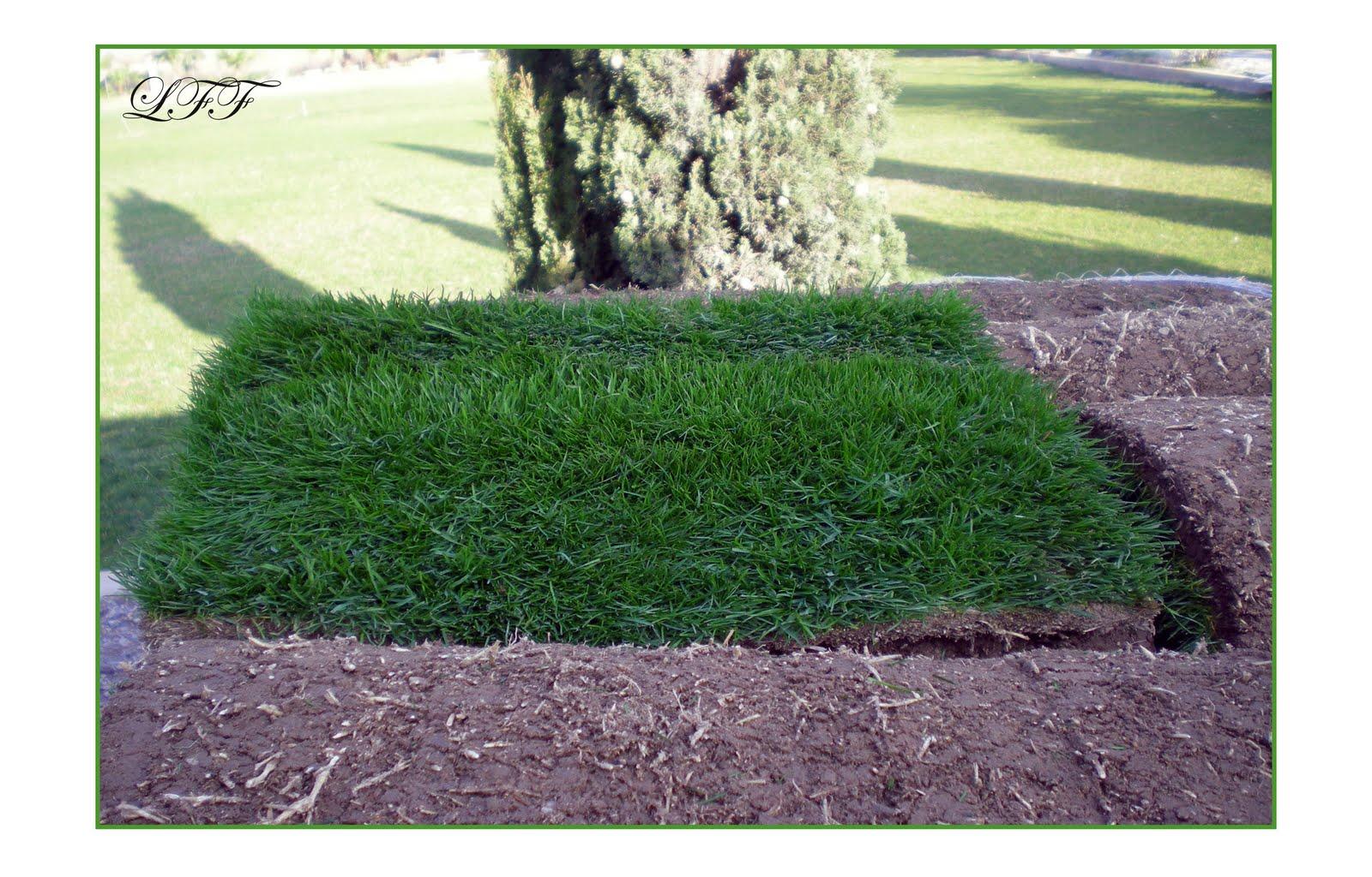 Pensando jardines c spedes y gramas - Como plantar cesped en el jardin ...
