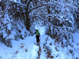 Im winterlichen Bergwald