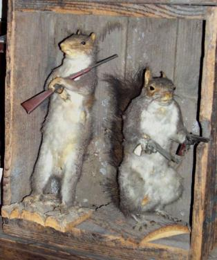 funny squirrels with guns |Funny Animal