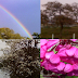 Como explicar as estações do ano corretamente