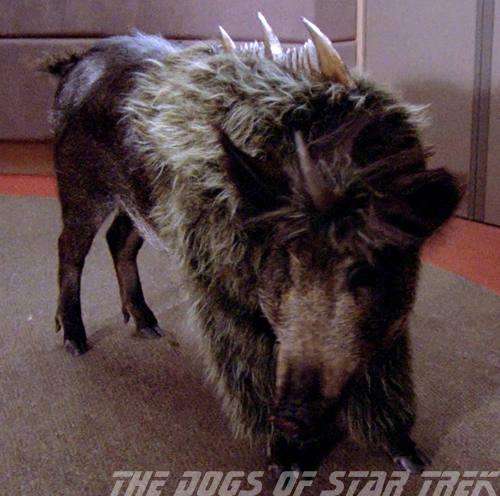 Miles & Emma: The Dogs of Star Trek