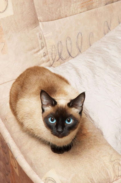 10 Most Friendliest Cat Breeds