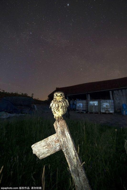 British photographer to capture stunning owl shocking moment
