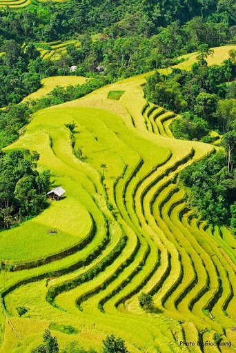Terraced fields in Hà Giang Province - Vietnam