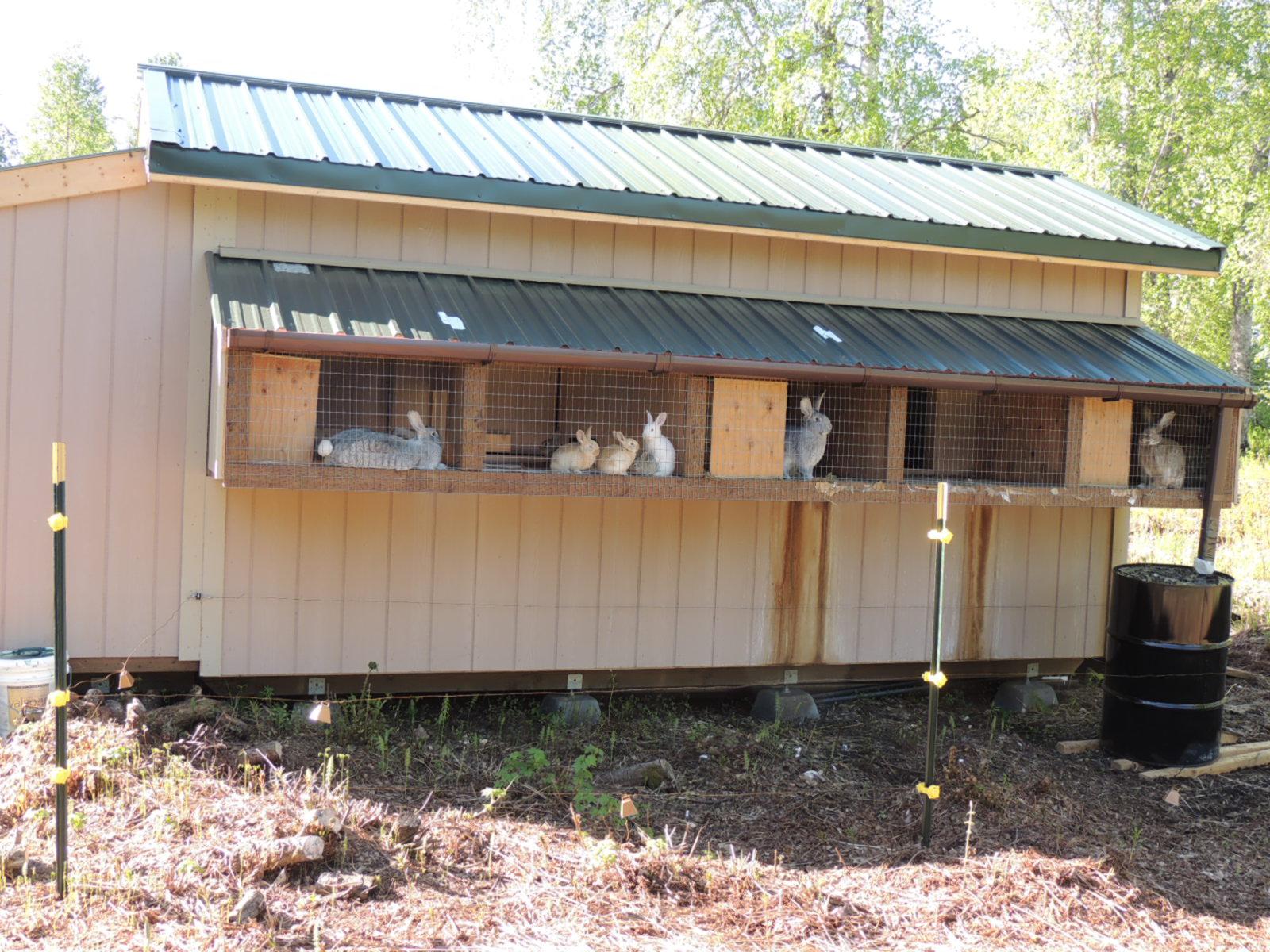 alaska bush life off road off grid raising meat rabbits in alaska