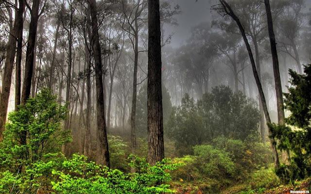 صور : لقطات ساحرة من غابات الأمازون