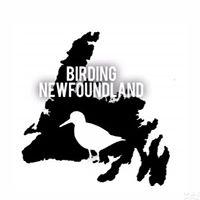 Birding Newfoundland