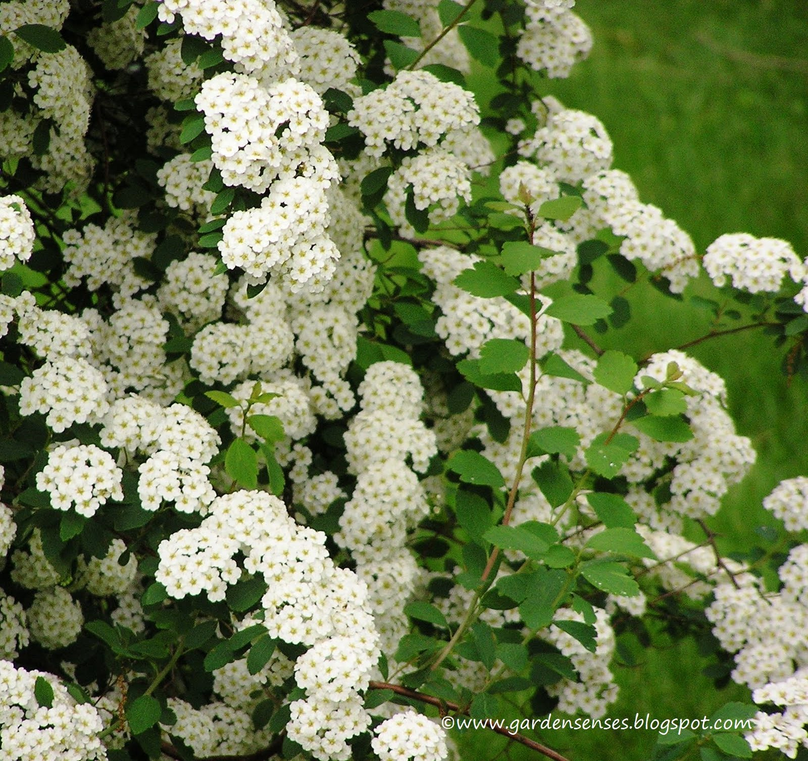 Garden Sense May 2011
