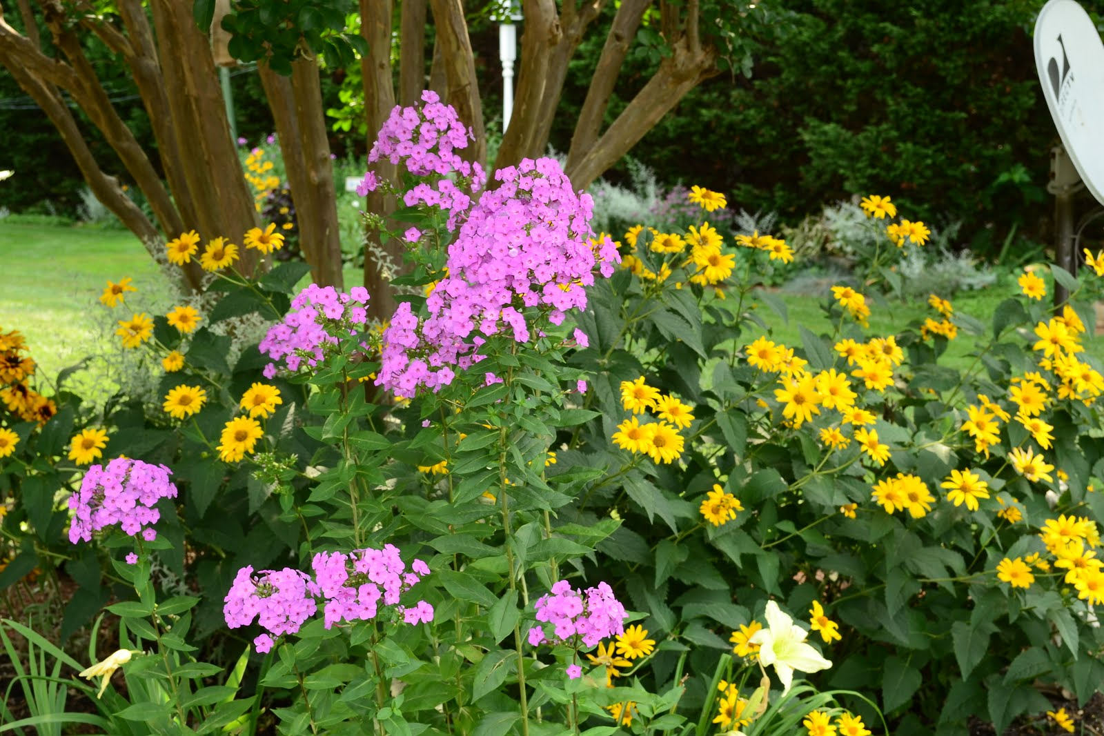 Flowers and Nature in my Garden Flower Beds