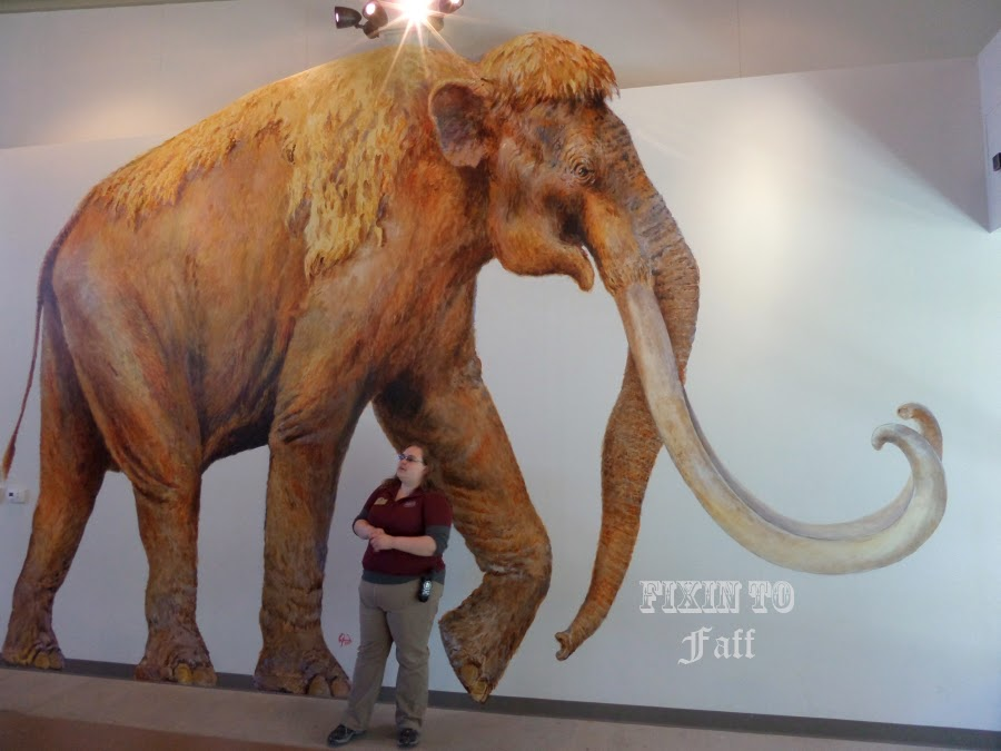Here Eva stands in front of a life-sized painting of Mammoth Q, drawn from actual measurements of the bones.