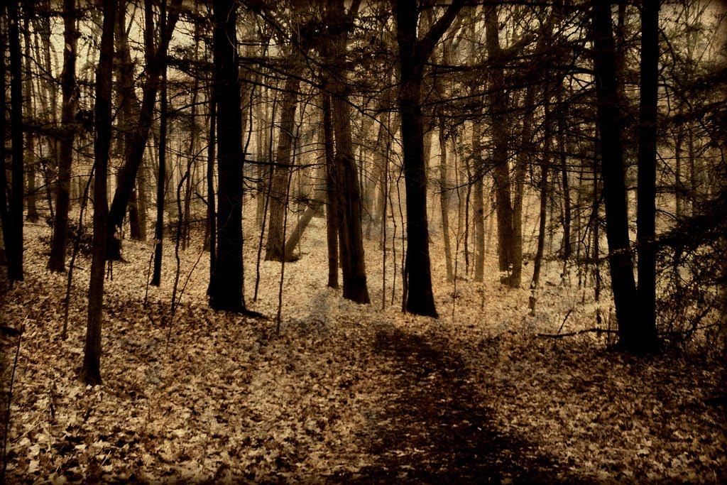 Secret forest youtube