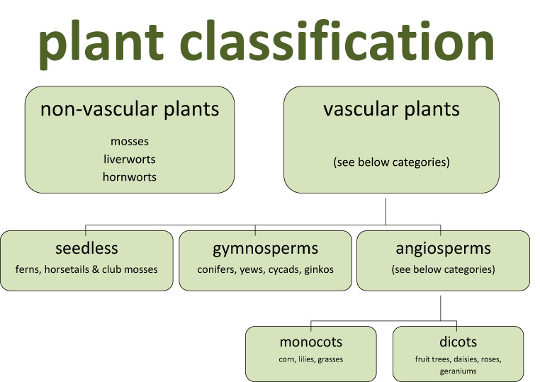 our nest of 3 plant classification poster for botany study