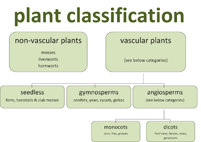 classification of plants.