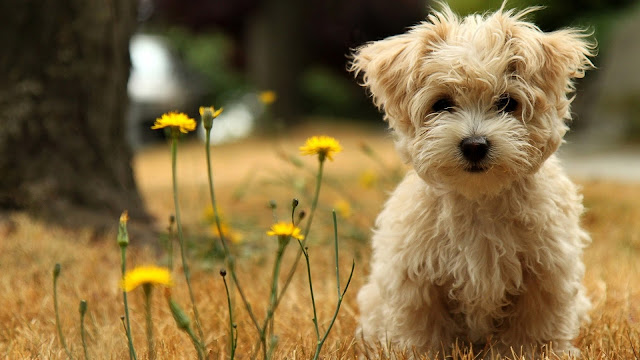 Yellow Flowers And Cute Dog Puppy Wallpaper