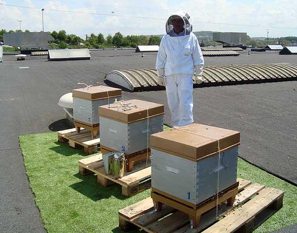 union syndicale des apiculteurs picards. Black Bedroom Furniture Sets. Home Design Ideas