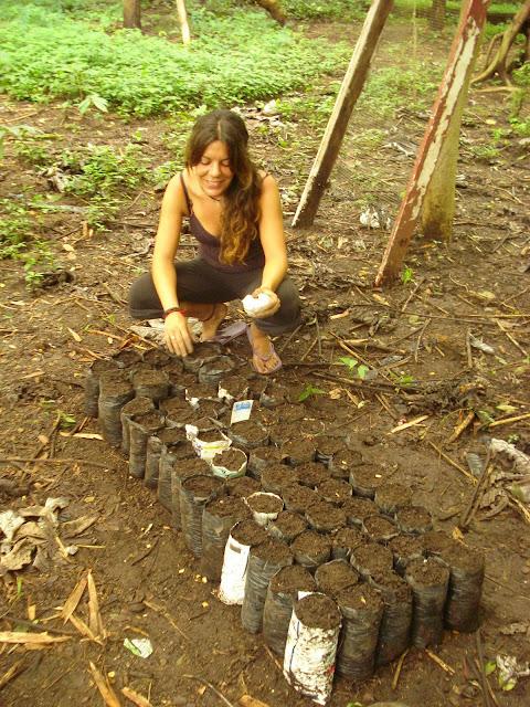 reforestation volunteer