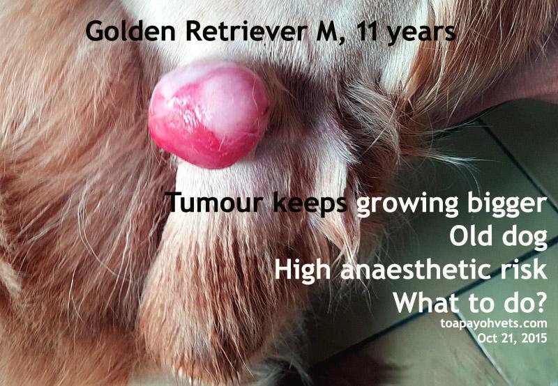 Dog anal tumor