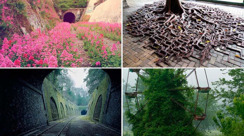 Fotos de la naturaleza ganando la batalla contra la civilización