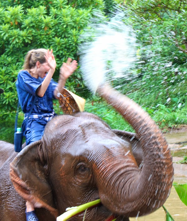 Bathing with elephants at the Four Seasons Tented Camp Golden Triangle, Thailand