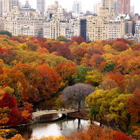 Central Park's Woodlands Stewardship Event Friday