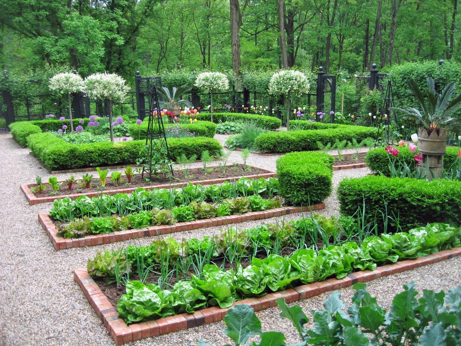 Фото огорода красивый дизайн