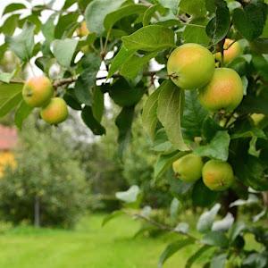 Nam, jälleen maailman parhaan ja helpoimman omenapaistoksen aika!