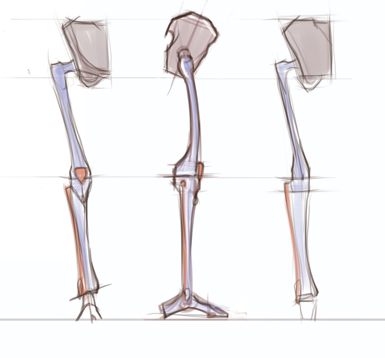 figuredrawing.info news: Leg anatomy - process