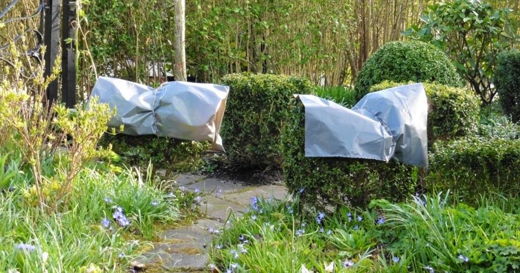 In m jn tuin tuinfoto 39 s maart - Bijzonder tuinfoto ...