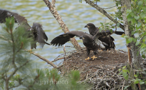 Learn About Eagles - FAQ - National Eagle Center