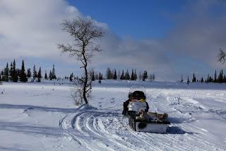 Дорога в деревню Коткино, Ненецкий автономный округ, снегоход