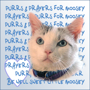 Many purrs to Moosey.