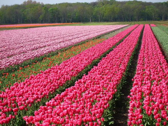 flores cidade jardim: de flores flores holanda holandeses e europeus jardim da cozinha