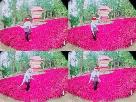 Foto ABG Alay Perusak Taman Bunga Baturaden