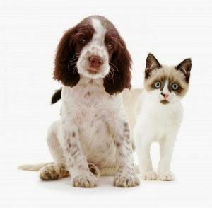 Infocardiovet la lidocaina nella cardiologia del cane e - Cane occhi azzurri ...