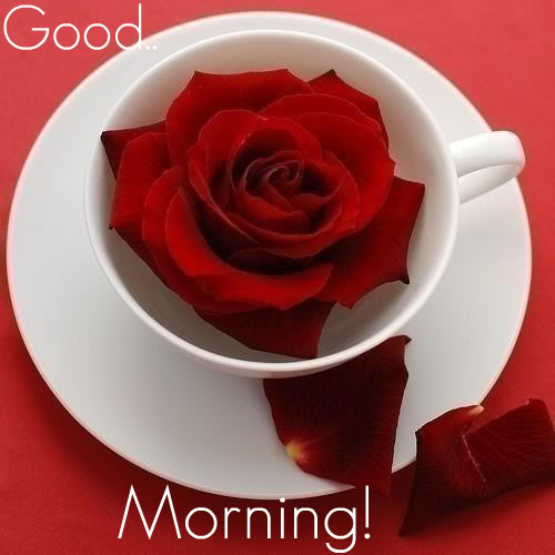 Good Morning Roses Download : Kata ucapan selamat pagi romantis pusat download