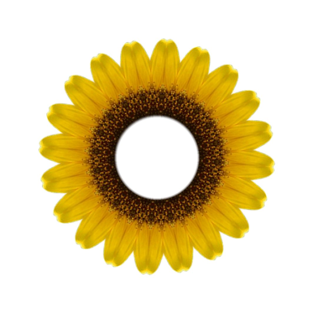 Covered in Glue: Freebie Sunflower Frame for Scrapbooking or Cardmaking.