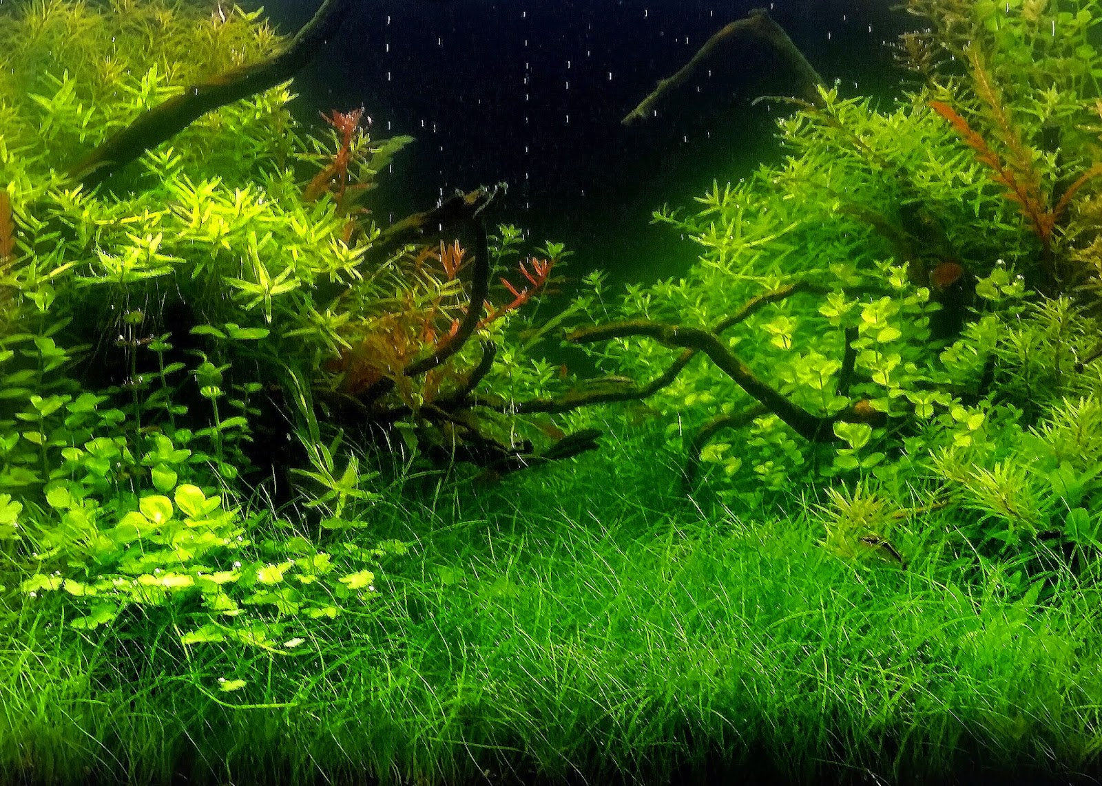 Aquascaping spain night forest by pablo fernandez - Aquascape espana ...
