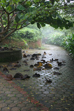 Wayanad Monsoon