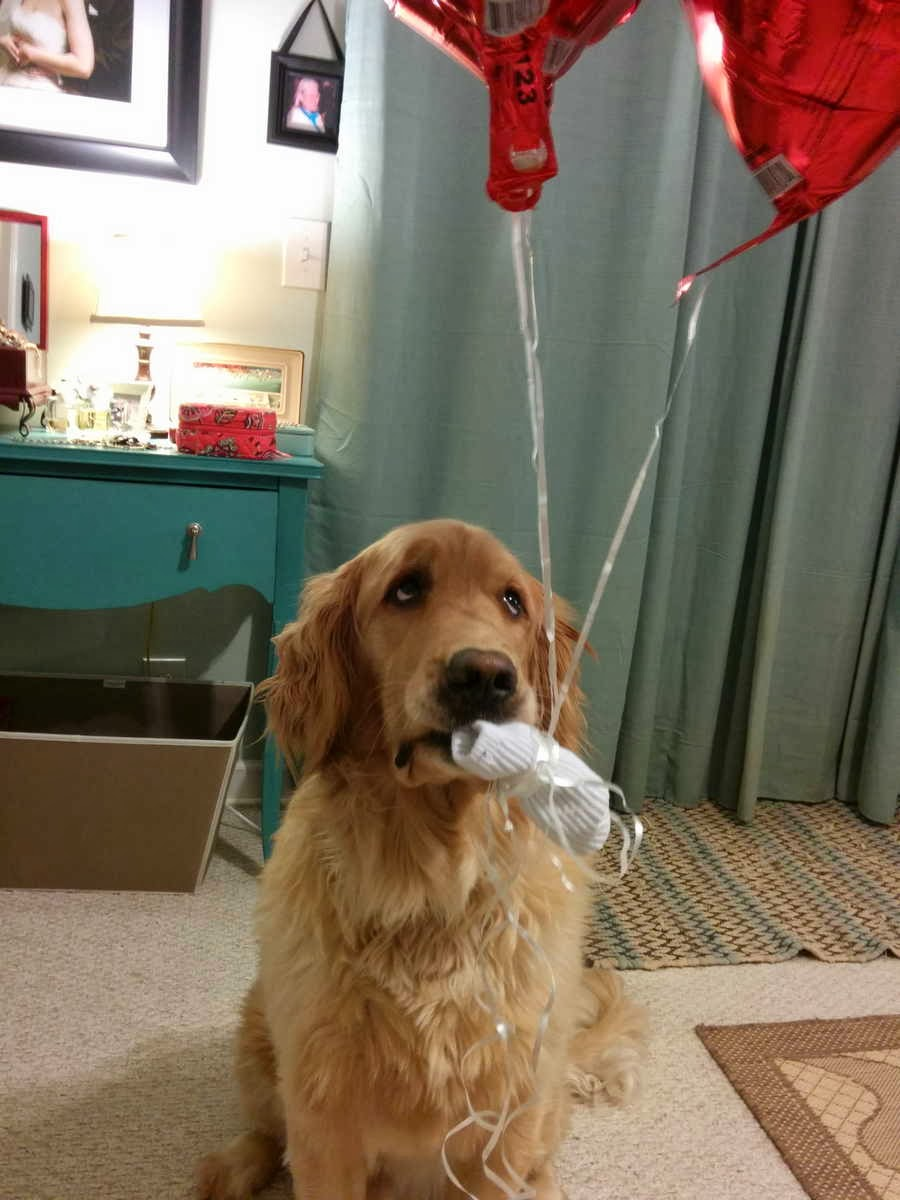 adorable dog pictures, sad dog holds balloons with his mouth