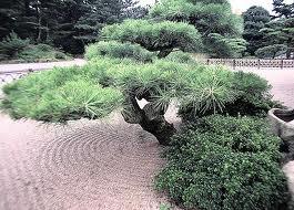 Il giardino delle naiadi il giardino acquatico orientale for Conifere da giardino