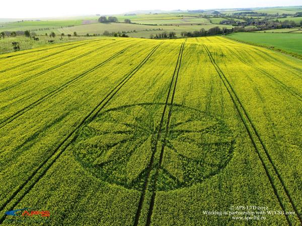Crop Circles 2012 Crop6