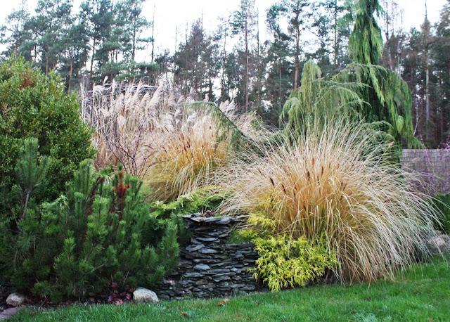 trawy co robić na zimę, wiązać czy nie wiązać traw na zimę, kiedy ścinać trawy ozdobne, jesienne kolory w ogrodzie, piękny ogród, nowoczesny ogród blog ogró dom desiggn projekt dla kobiet