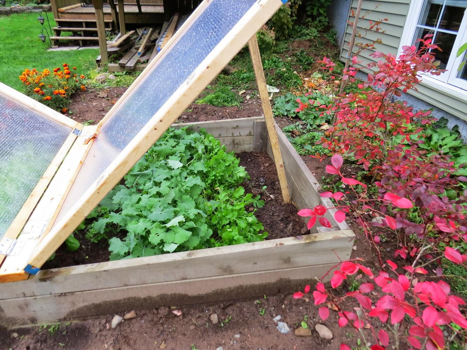 Niki Jabbour - The Year Round Veggie Gardener: Linda\'s Cold Frames