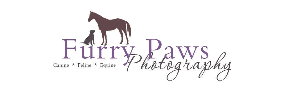 Furry Paws Photography